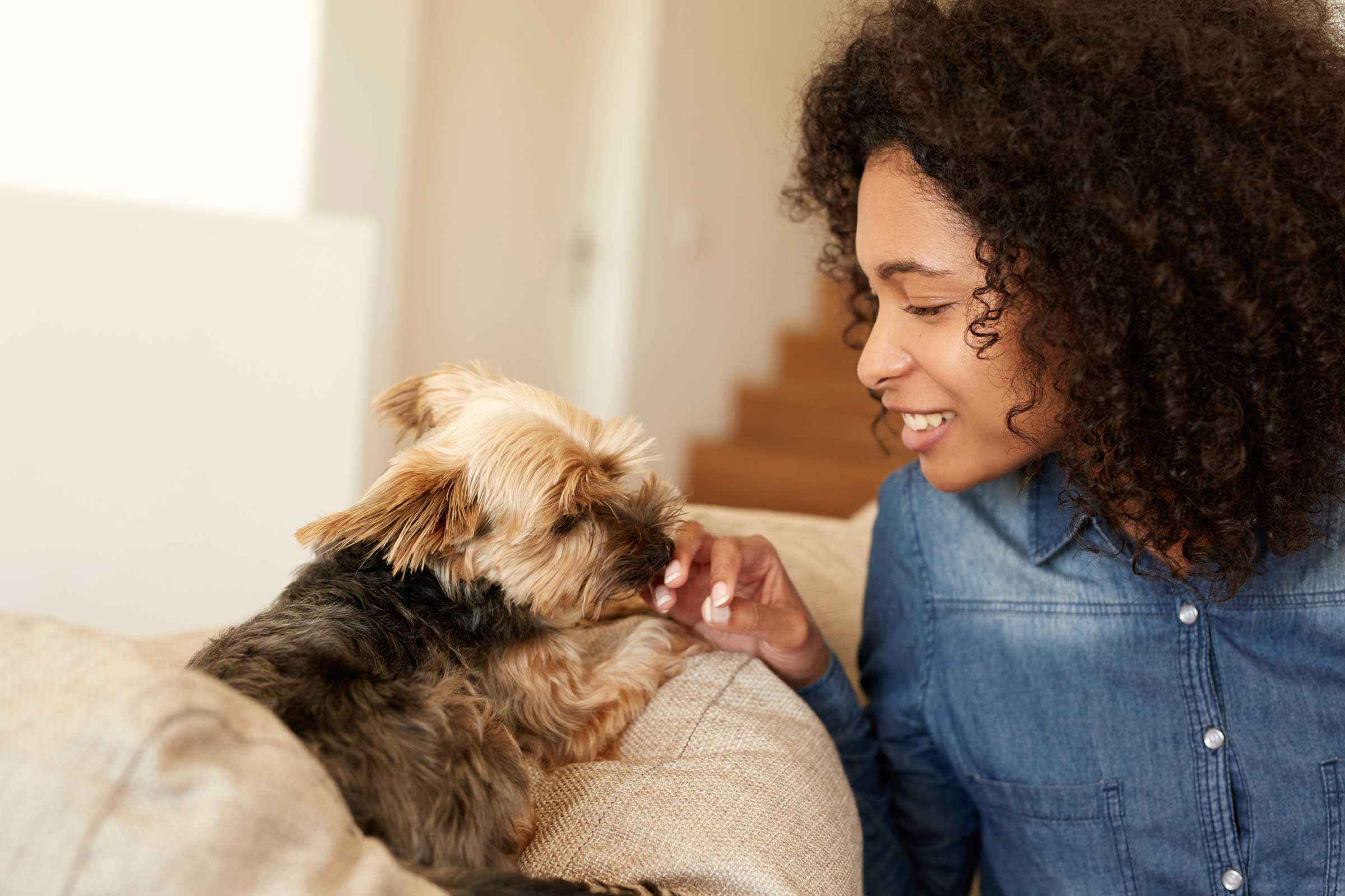 how much does pet sitting cost in 2018